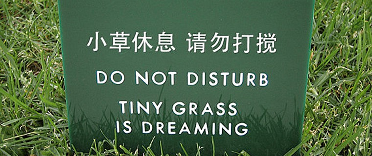Tiny Grass Dreaming